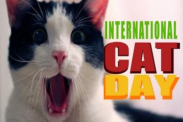 عيد القطط !