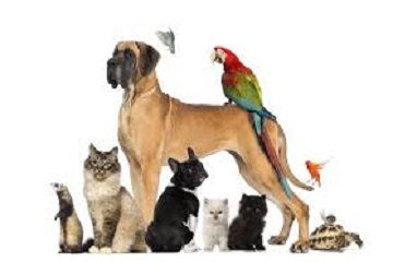 أناقة في عالم الحيوان