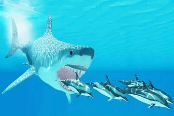 سمك القرش الأبيض