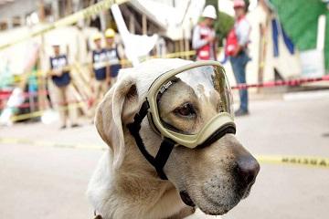 الكلبة الشجاعة