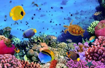 الكائنات البحرية بأمان