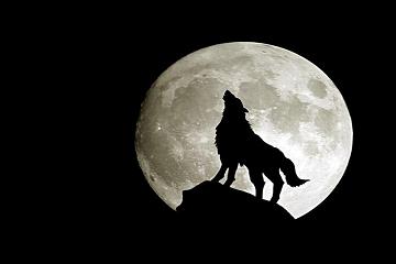 قمر الذئب يقترب!!