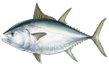 سمكة بثروة !!