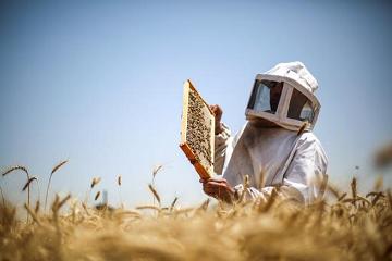 نجاحٌ في العسل