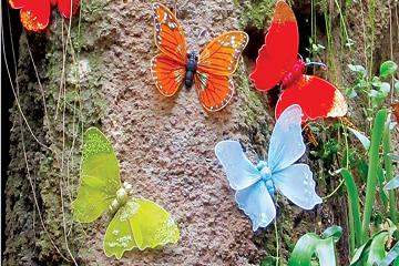 الفراشات-هنا-وهناك