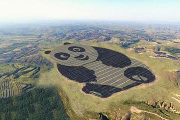 الباندا مصدر الطاقة الجديد!!